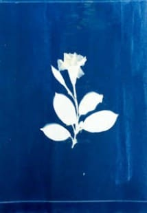 Exposure to Blue – Cyanotype Workshop and Lecture